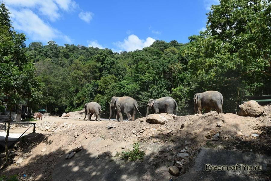 Кхао кхео vip – описание экскурсии в зоопарк кхао кхео в паттайе