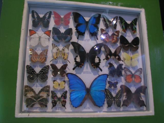 Сад бабочек и мир насекомых (butterfly garden & insect world) на пхукете