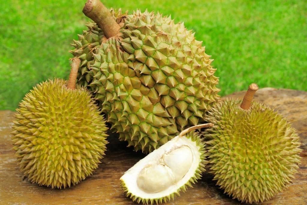 Экзотический фрукт дуриан — как выглядит и чем пахнет? (фото)