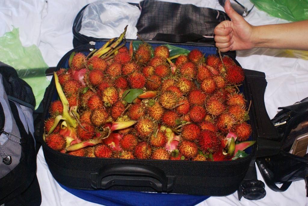 Какие фрукты можно вывозить из таиланда?