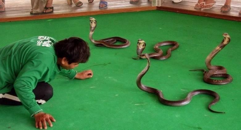 Где в таиланде находится змеиная ферма?