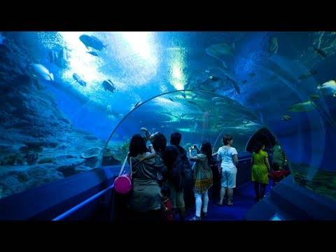 Океанариум underwater world pattaya в паттайе