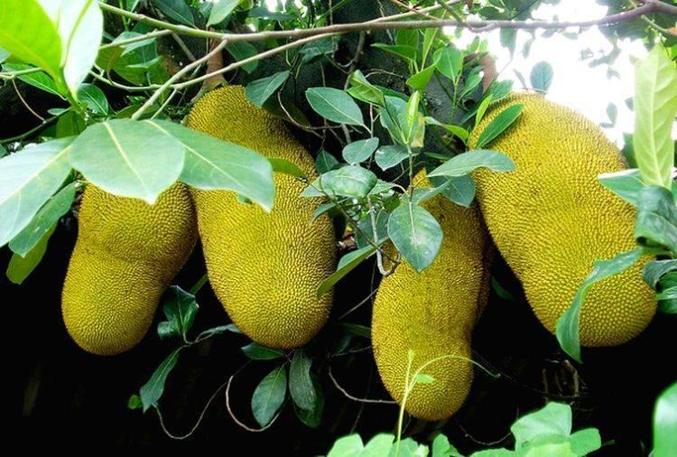 Как везти фрукты из таиланда в россию — подробное руководство