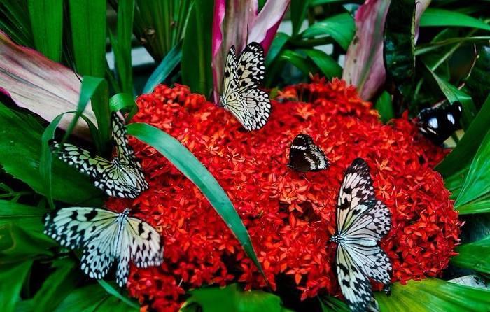Сад бабочек, пхукет – описание, отзывы • вся планета