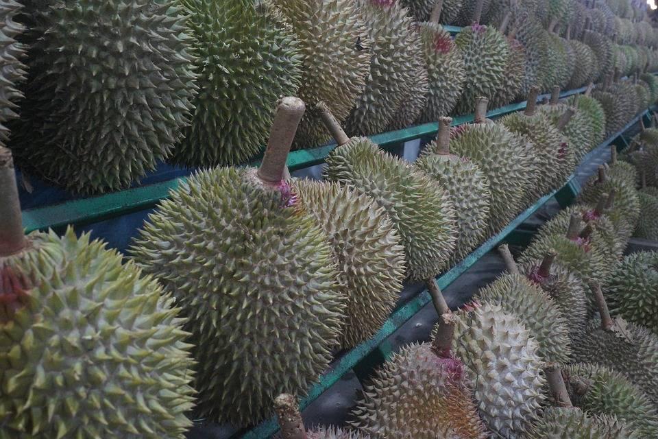 Польза джекфрута и дуриана, а также их отличия от других фруктов таиланда