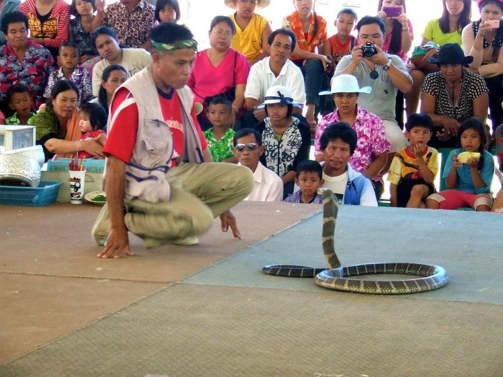 Змеи в тайланде: я встретил 6 штук
