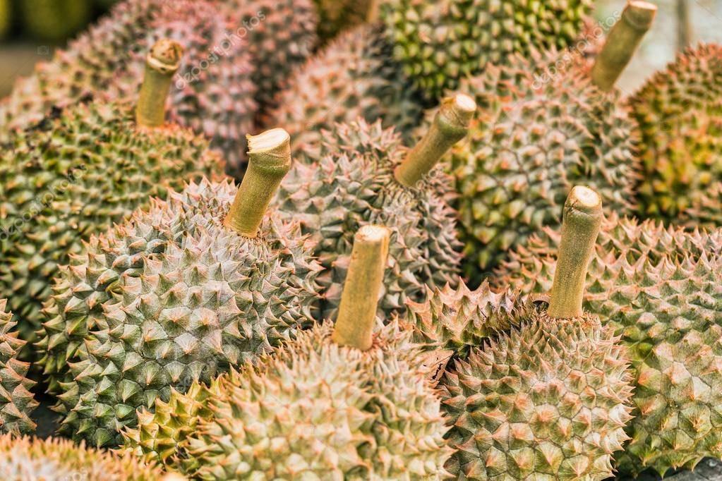 Фрукт дуриан: раскроем все тайны связанные с фруктом дуриан