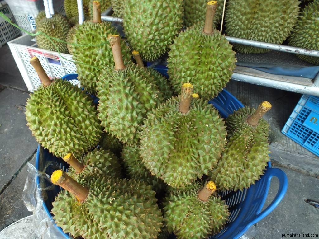 Дуриан — король среди фруктов