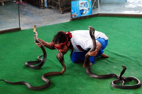 Змеиная и крокодиловая фермы в паттайе