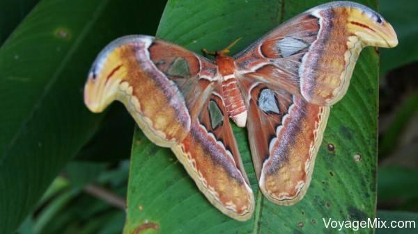Сад бабочек на пхукете