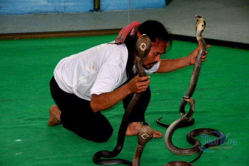 Змеиная ферма в паттайе: развлечение или лечение?