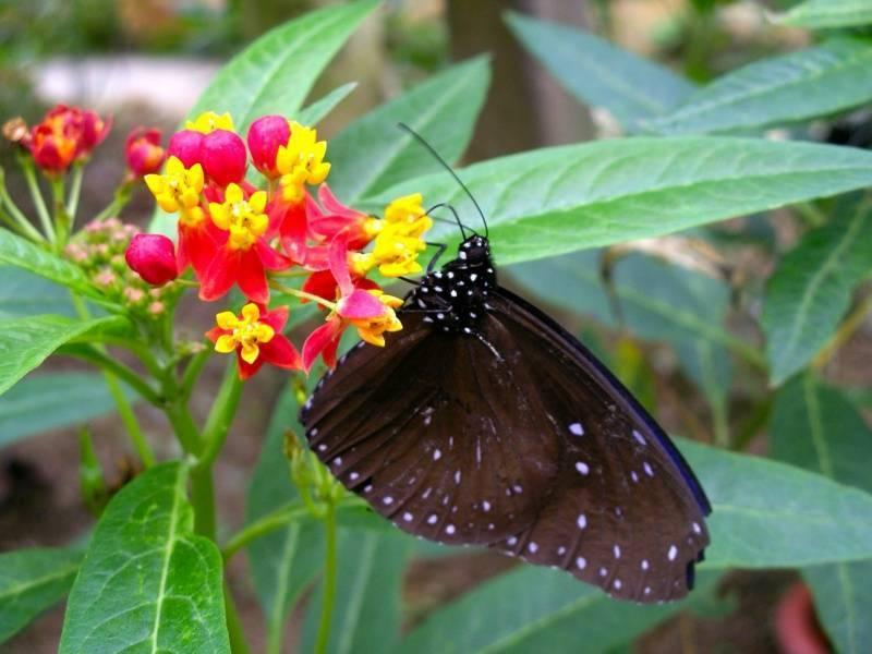 Сад бабочек на пхукете: адрес, время работы, история, описание, карта.
