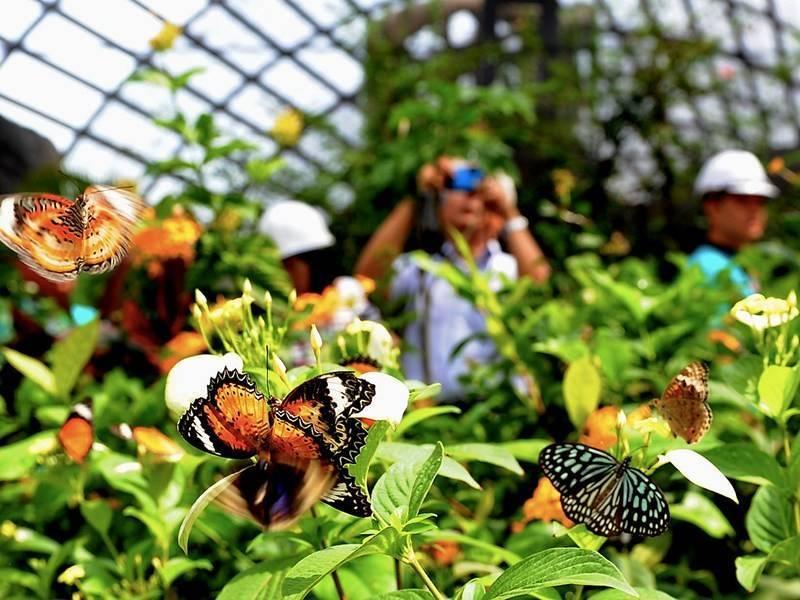 Парк бабочек в куала лумпур. потрясающий способ зарядиться позитивом