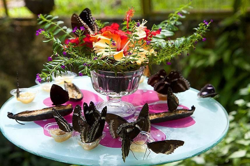 Пхукет сад бабочек и мир насекомых