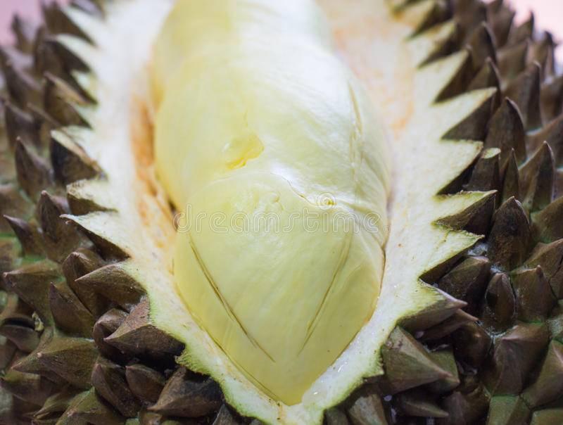 Дуриан фрукт — описание и полезные свойства пахучего плода