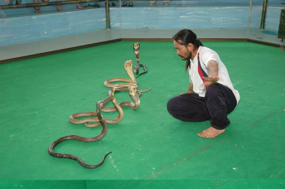 Змеи в тайланде: я встретил 6 штук - site2max