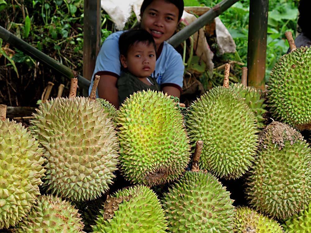 Фрукты таиланда ???? полный перечень с фото, названием и подробным описанием на 2021 год