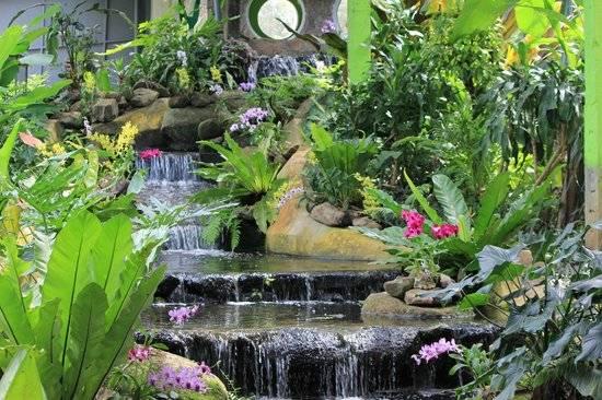 Ботанический сад пхукета - обзор, как добраться, отзывы • вся планета