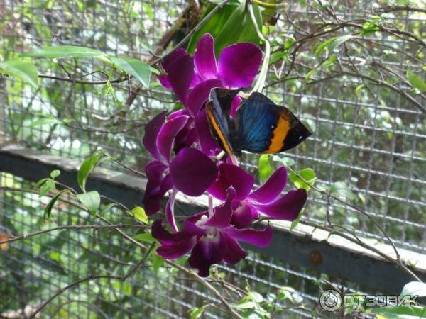 Обзор «сада бабочек» на пхукете