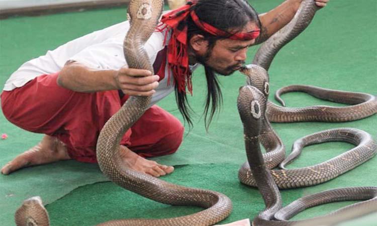 Альказар и шоу змей в тайланде